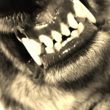 CdL 42 : Le loup