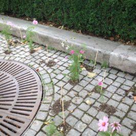 Balade fleurie dans les rues de Lausanne