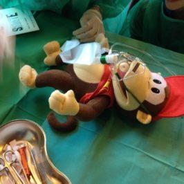 Blouses blanches et doudous : une matinée à L'hôpital des Nounours
