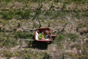 Du champs à l'assiette - les sorties au vert de La Brouette
