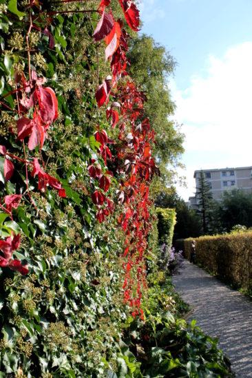 En longeant les jardins communautaires du parc du Désert