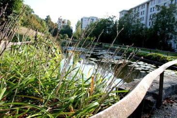 Le long étang du parc du Désert
