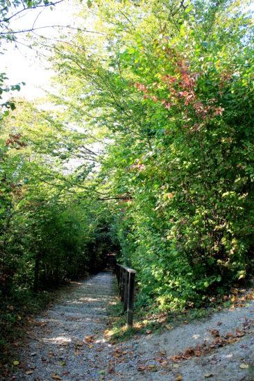 Vue d'un chemin descendant du parc du Désert