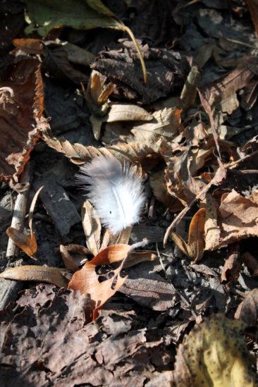 Une plume parmi les feuilles jaunies du parc