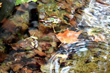 Ballet d'eau et de feuilles à la rue des Deux-Marchés (3)