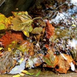 Ballet d'eau et de feuilles à la rue des Deux-Marchés (2)