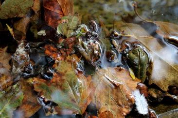 Ballet d'eau et de feuilles à la rue des Deux-Marchés