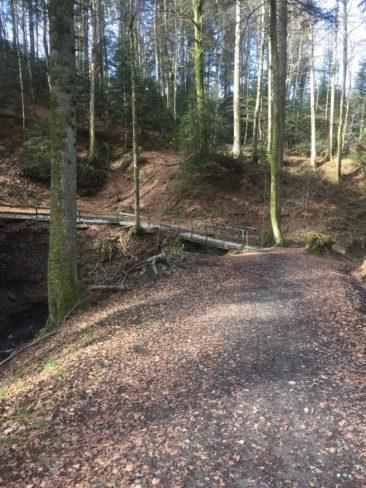 Le chemin de Compostelle, un peu plus loin dans les bois du Jorat.