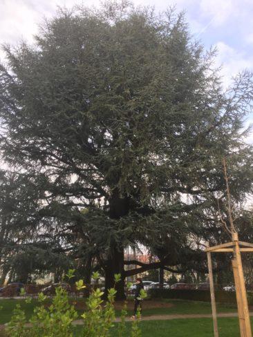 ... au bord de laquelle sont plantés certains des arbres les plus imposants de la ville...