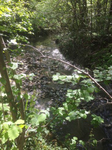 La rivière de la Vuachère non plus.