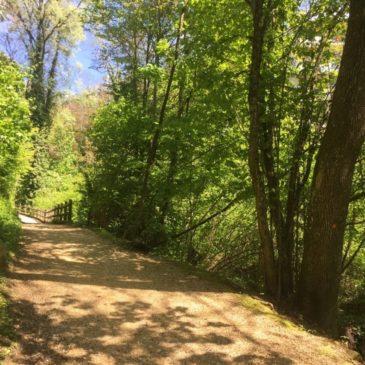 Une belle balade à Lausanne : Le chemin de la Vuachère
