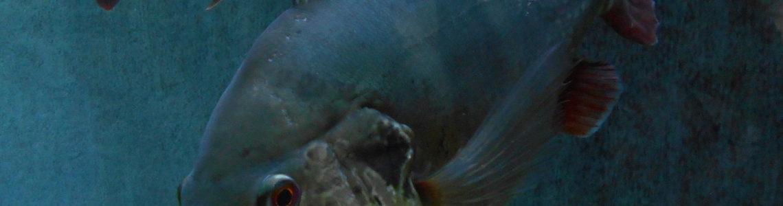 Plonger dans l'univers d'Aquatis: Est-ce la peine?