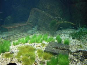 Dans les aquariums aussi la décoration est des plus soignée.