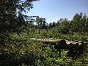 Beauté touchante de nos forêts.
